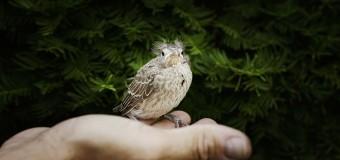 Independizarse, primer paso para salir del nido