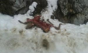 corzo muerto, nieve Palencia