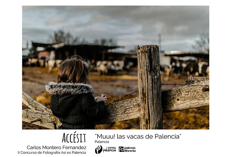 premio-Así-es-Palencia-Accésit_Carlos-Montero-Fernandez_Muuu!-las-vacas-de-Palencia,-para-web