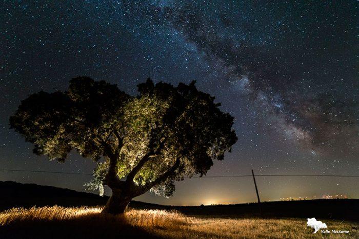 Fotografía nocturna de una encina y de la vía láctea. Palencia diferente