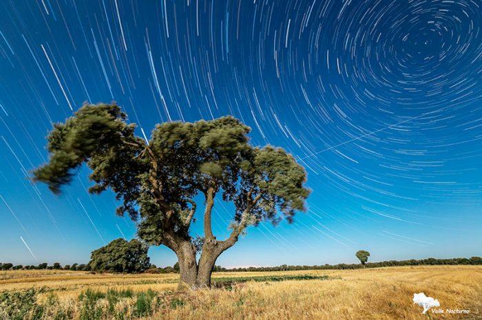 Fotografía nocturna de una encina y del efecto circumpolar. Palencia diferenteel efecto circumpolar. Palencia diferente